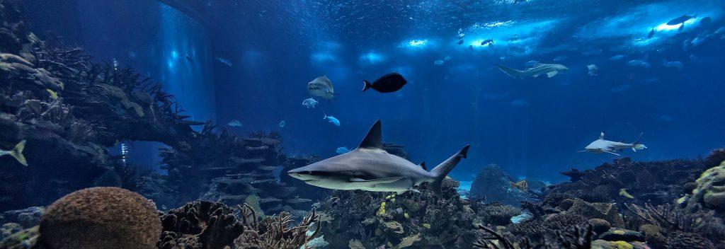 Besuchen Sie das Lissabon Aquarium