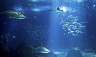 Visiter Lisbonne Oceanarium