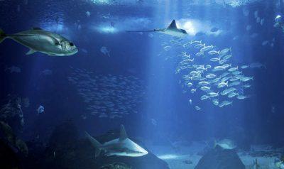 Besuchen Sie das Lissabon Oceanarium